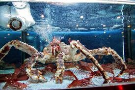 China Live King Crab